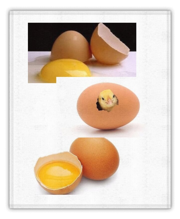 proteina de huevo 260 - Dietaproteica10.com