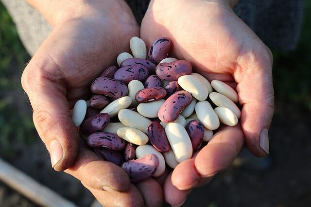 frijoles y legumbres alimento rico en hierro
